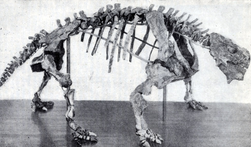 http://paleontologylib.ru/books/item/f00/s00/z0000001/pic/000112.jpg