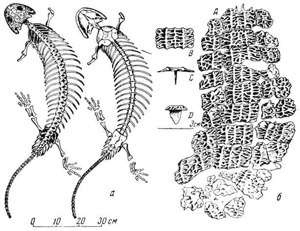 а - скелет с черепом,