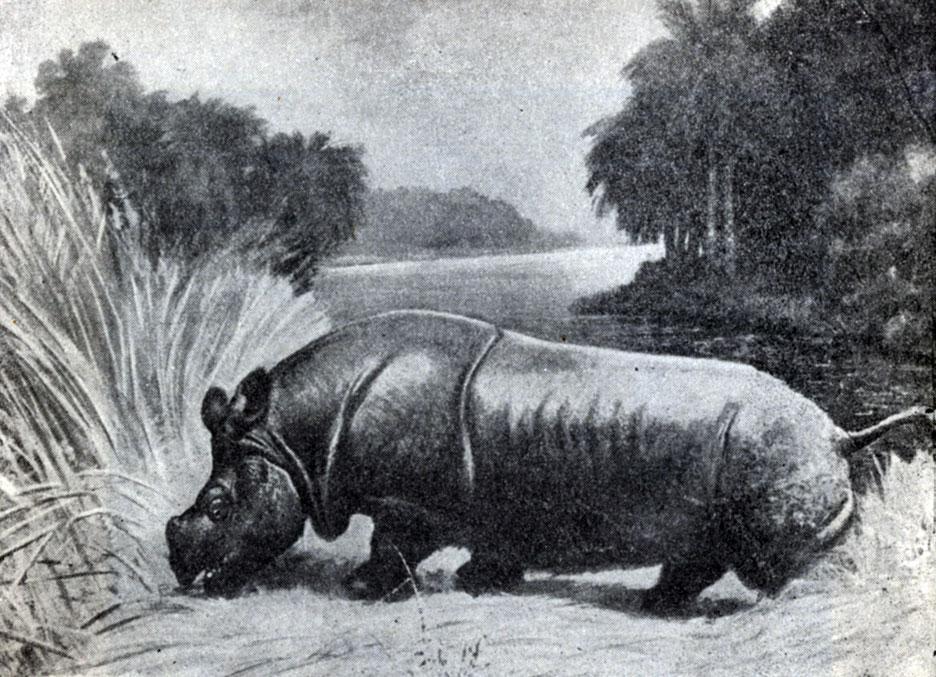 История слонов, носорогов, лошадей [1957 Трофимов Б.А. - Жизнь в ...